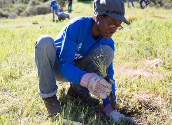 SCA Alternative Spring Break program in Ventura CA 2013 - Volunteer planting native grasses