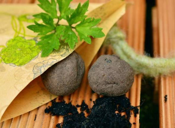 5 Cool Facts About Seed Bombs