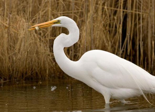 SCA Interns tracking Great Egrets at John Heinz National Wildlife Refuge