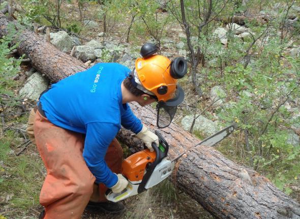 VFC member, Marshall, bucking downed timber.