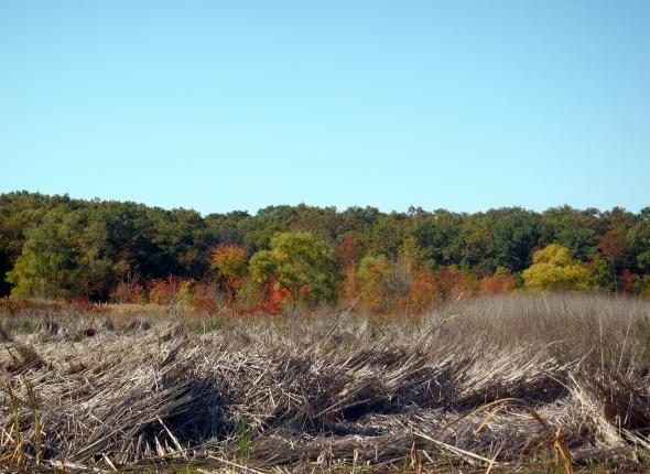 Fall Colors in the Bog