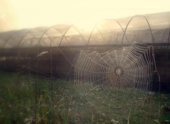 Morning dew on a spider wed at the NPS greenhouse