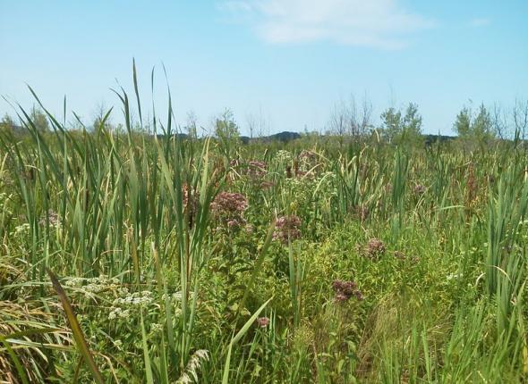 Cowles Bog remnant prairie