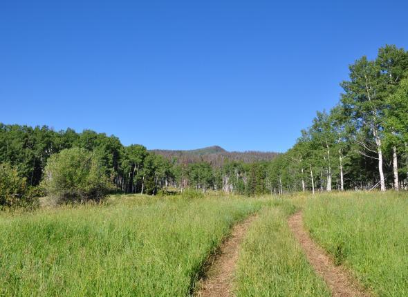 Morrison Creek area CO