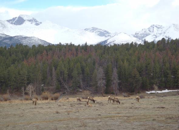 Wildlife SCA VFC 2 2013 - Rocky Mountain NP Elk