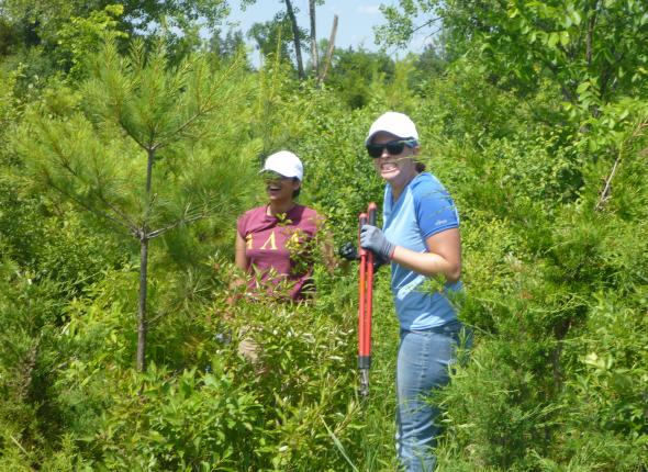Kayla and I pullin' some invasives in NY (see Hudson Valley post below)