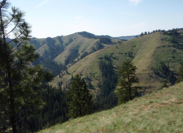 North Fork Umatilla River Wilderness