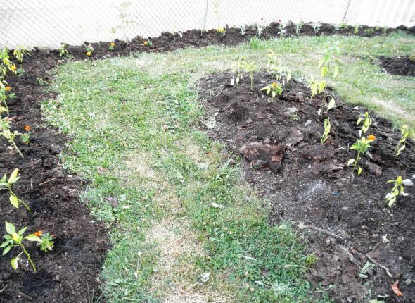 Community Center garden plot