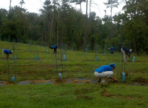 The gang hard at work at the American Chestnut Project!
