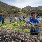 SCA Alternative Spring Break program in Ventura CA 2013 - Volunteer planting native grasses