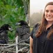 Some nesting Bald Eages at the Upper Delaware Scenic and Recreational Area where SCA Member Anya Shaunessy has been serving as a Centennial Volunteer Ambassador