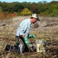 Mason installing Native Plants in Cowles Bog