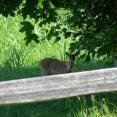 A little fawn came to say hello!